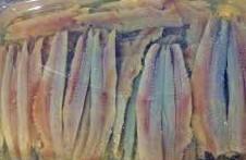 Boquerones en vinagre, receta tradicional, casera, vino blanco, vinagre, perejil, anisakis, congelador, agua fria, ajo, bocadillo de boquerones, comer, pescado, dieta mediterránea