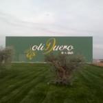 Almazara de OlI Duero, Primera prensada, oliva, aceituna, aceite virgen extra, aceite, fabrica, maridaje gourmet, maridaje, maridaje gourmet y mas