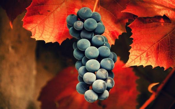 Vino blanco,vino tinto, viñedo, viñedos,nota de cata, cava, Vino, Vino natural, Bodegas spuche lacy, vinos de valencia, valencia, beber vino, beber,vino ecoligico, uva bobal, uva, uva garnacha,uva tempranillo,viñas centenarias,salir en valencia, Paterna, bodegas en paterna, licor de jengibre,jengibre,Maridaje Gourmet y Mas, maridaje, gourmet, maridaje gourmet, evento gastronomico, experiencia gastronomica,catar vinos, catas,