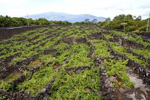 Comer en Las Azores, Que comer en Las Azores, comida de Las Azores, Comida Tipica, Comida Tipica de Las Azores, Que ver en las azores, Gastronomia de Las Azores, productos de las Azorez, que comprar en las Azores, Restaurantes, restaurantes en Las Azores,Turismo, Turismo en Las Azores, que visitar en Las azores,Vino, Vino Blanco, vino portugues,Viñedos en Las Azores, Viñedos,para comer en Las Azores,Clima de Las Azores, Playas en Las Azores, Maridaje Gourmet yMas, Maridaje, Gourmet, Isla Santa María, Isla Corvo,Com Vento de Corvo,Isla de Flores, Isla Graciosa, Isla Terceira,Isla São Jorge,Isla Faial, Isla Pico,Reserva Mundial de la Biosfera,vacaciones en contacto con la naturaleza,isla de San Miguel,Red Europea y Global de Geoparques,Geoparque de las Azores,Contacto con la naturaleza,Windsurf, submarinismo, parapente, espeleología,Patrimonio de la Humanidad de la Unesco,National Geographic,turismo sostenible,primer destino Quality Coast,Atlántico norte,región de Furnas,avistamiento de cetáceos,vacaciones de Naturaleza, donde ir en vacaciones de Naturaleza,viajes de Naturaleza, Viaje de Naturaleza, Cratas, crustaceos Carta,Donde veranear en verano, Mar Atlantico,vacaciones, vacaciones en las Azores, vacaciones en las islas Azores, donde veranear, veranear, viajes,viaje,vacaciones de verano, donde ir en vacaciones, Azores, Archipielago de Las Azores Isla de Azores, islas Azores, Mar Atlantico, Atlantico,9 islas, islas Portuguesas, Islas Azores y nueve islas mas, Lisboa,